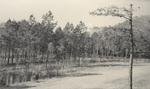 Charlton Plantation Following Storm