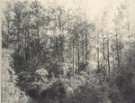Clear Fork Plantation