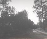 Dirt Road in Caddo Ranger District