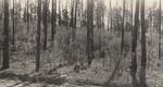Nubbin Ridge Summer Firekill
