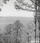 Lake View Through Trees #2
