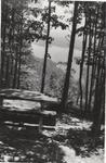 Lake View Through Trees #3