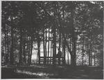 View of Lake Ouachita Through Trees